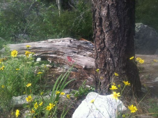 Sacred Plant Medicine Retreat on Mount Lemmon