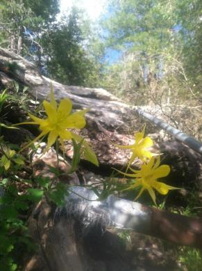 Sacred Plant Medicine retreat on Mt. Lemmon