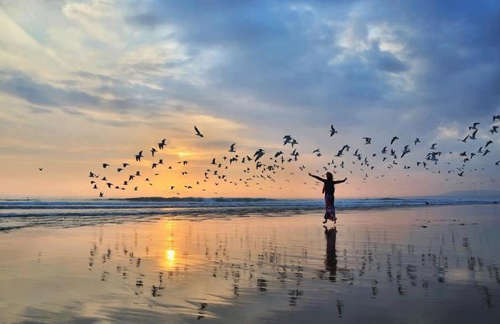 ocean liberation